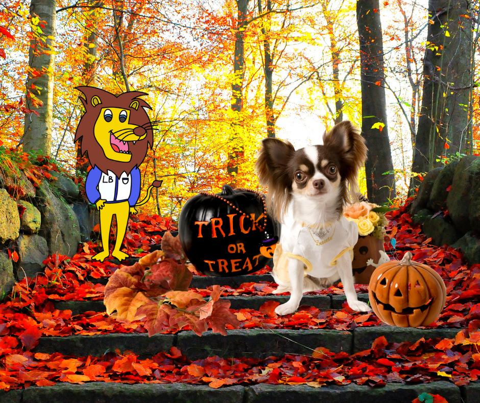 Photo avec un chien et une citrouille en automne